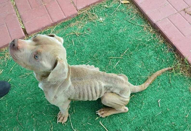 Emaciated dog sitting on the ground