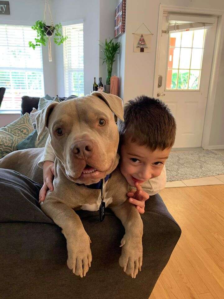 Little boy on couch with pit bull