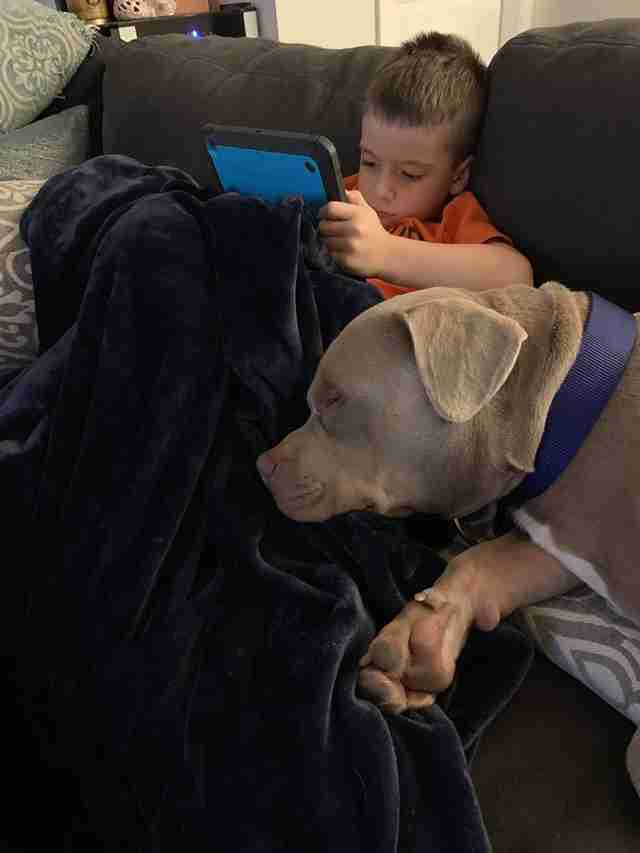 Pit bull mix snuggled up with little boy