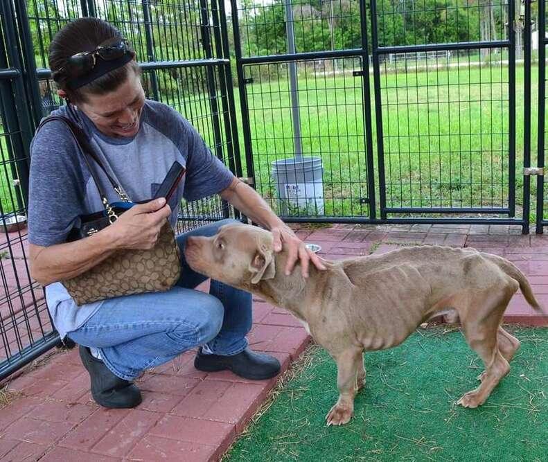Woman petting emaciated dog