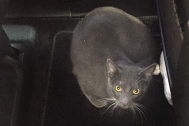 Cat sitting on floor of car
