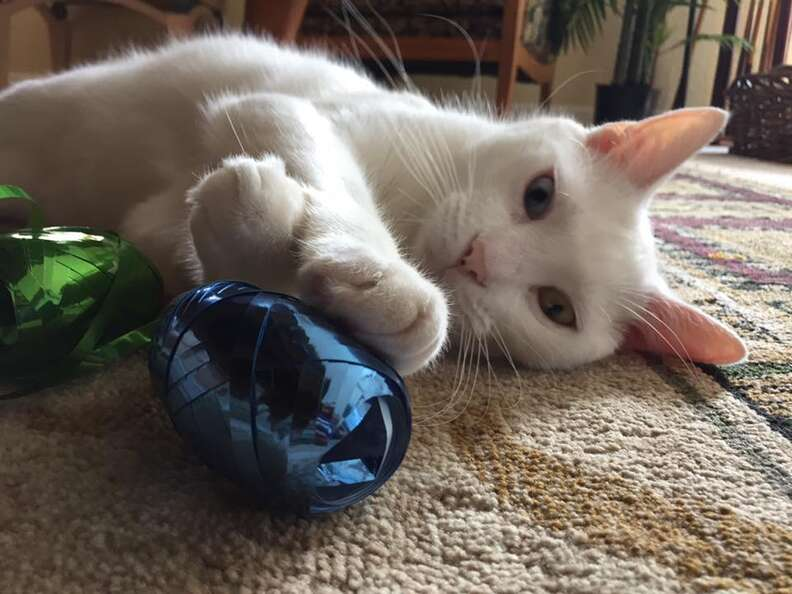 cat rescue cotton florida