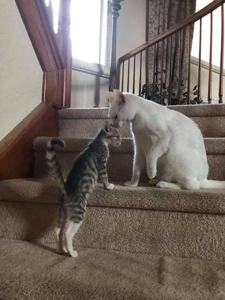 cat rescue cotton blind florida