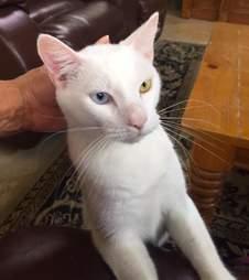 cat rescue florida cotton