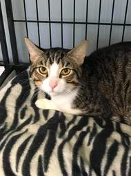 Cat abandoned in animal rescue's parking lot