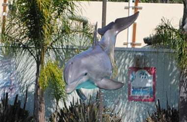 Dolphin performing at theme park