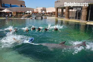 People participating in swim with the dolphin program
