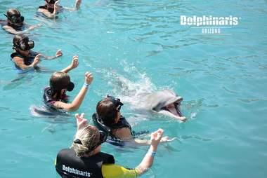 Children swimming with captive dolphin