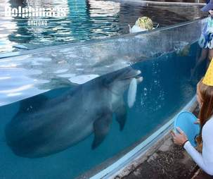 People looking at captive dolphin in tank