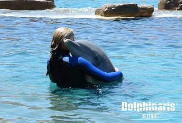 Person hugging captive dolphin