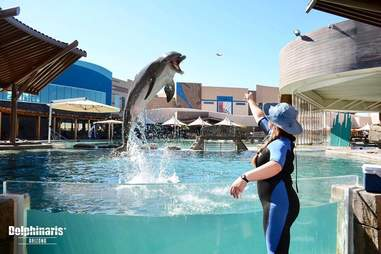 Trainer throwing food to captive dolphin