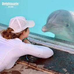 Woman watching captive dolphin through glass
