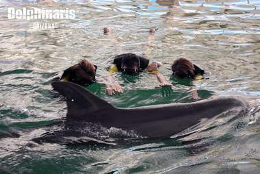 People in water with captive dolphin