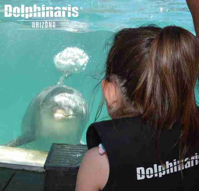 Woman looking at captive dolphin in tank