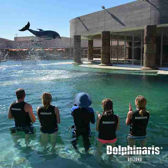 People watching performing dolphins