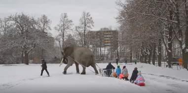Captive elephant pulling kids on sleds
