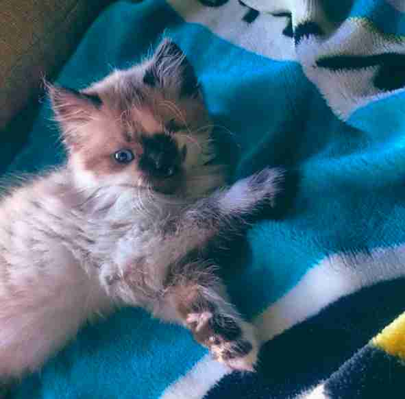 Tiny Kitten Was Going To Be Put Down Just Because He 'Looked Different'