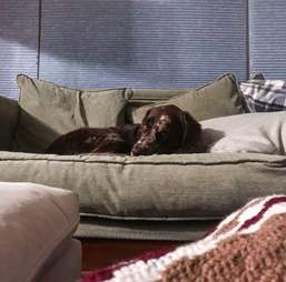 dog covered in pillows