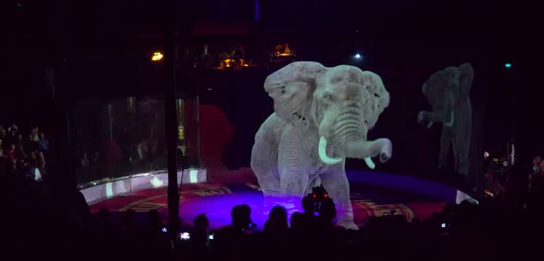 circus show austria