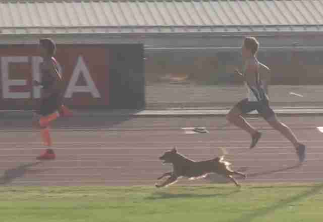 Happy Dog Randomly Joins Race — And Finishes First