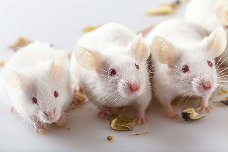 'DeepSqueak' A.I. Decodes Mice Chatter
