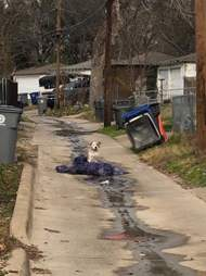 Abandoned dog sitting in Dallas alleyway