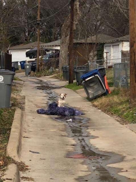 Abandoned dog sitting in Dallas alleyway