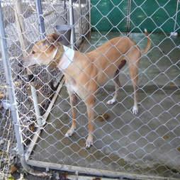 Dog inside concrete kennel at canine blood bank