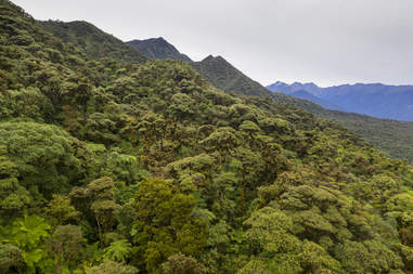 Bolivian rainforest where endangered frog lives