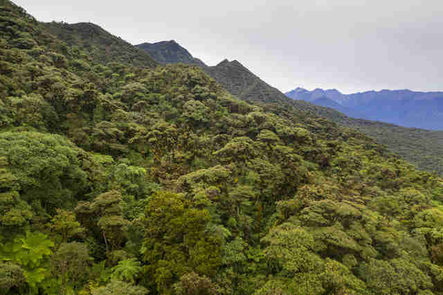 Bolivian rainforest where endangered frog lives