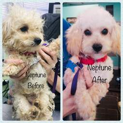 Dog transformation from neglected to clean