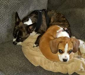 Nova the dog snuggling with her brother