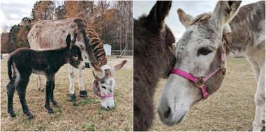 north carolina donkey rescue