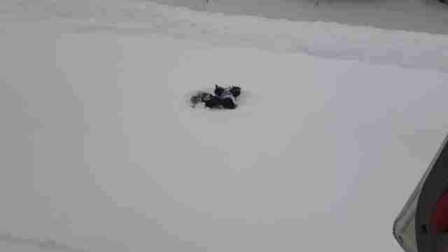 Black kittens abandoned in snowstorm