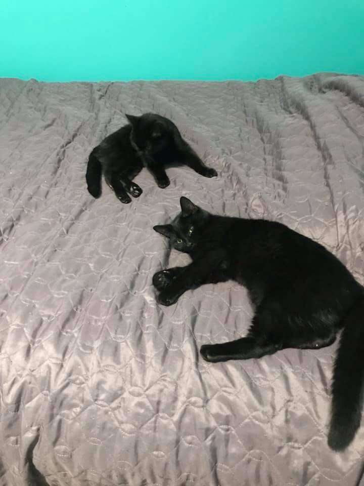 Kittens abandoned in snowstorm
