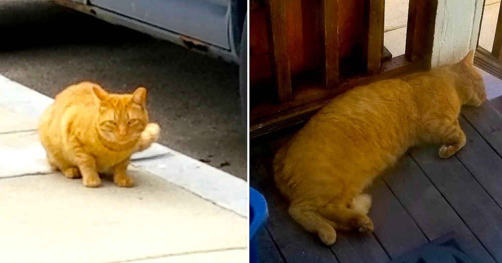 Tough Street Cat Shows Up On Porch One Day — And Decides He's Staying