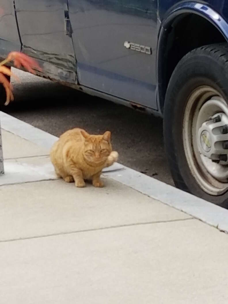 Hardened street cat in Boston