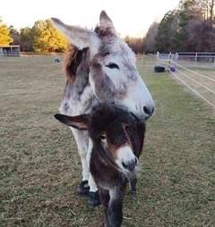donkey rescue mom north carolina