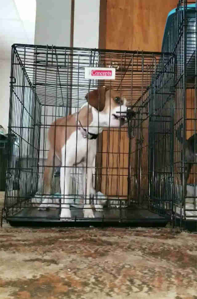 Nova the Borden terrier breaks out of her cage