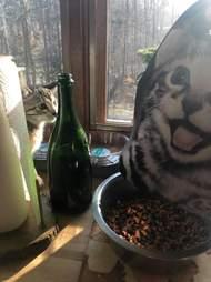 lunch box kitten