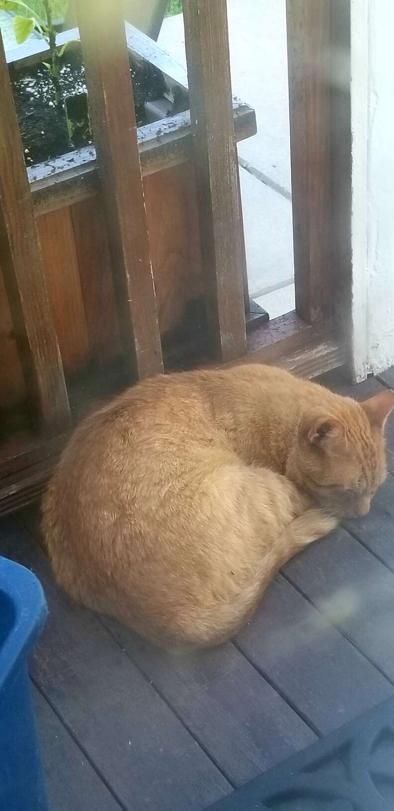 Street cat in Boston shows up on porch
