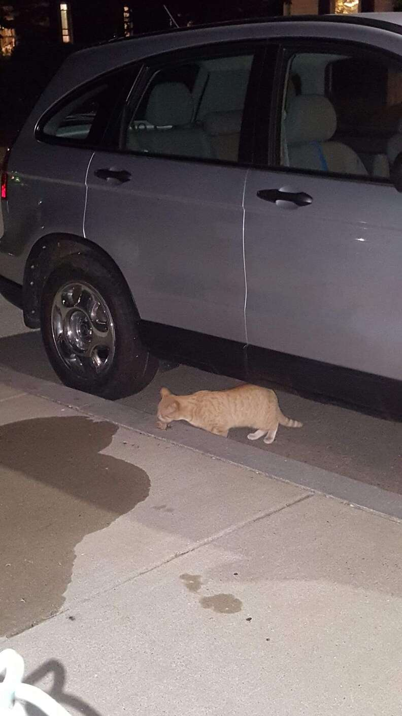 Boston street cat who adopted family