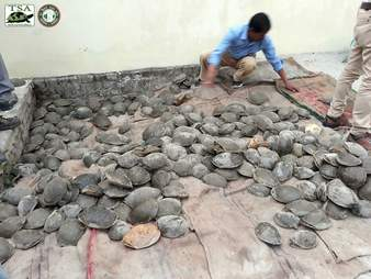 Rescued turtles who were being trafficked