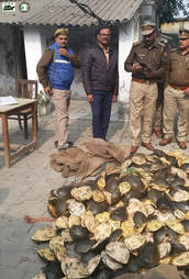 Authorities with confiscated turtles