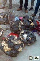 Turtles in mesh bags
