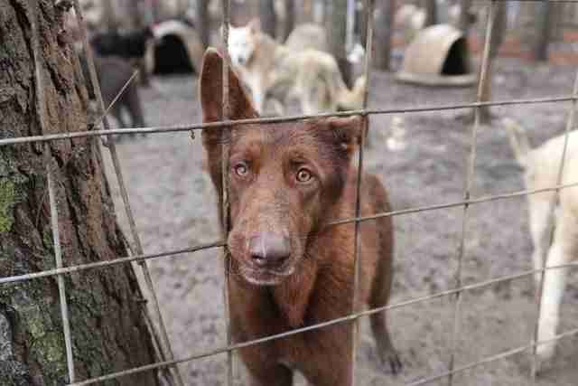 Sad looking dog inside pen