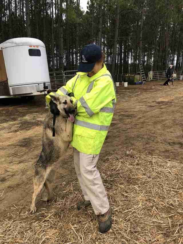 Dog jumping up into rescuer's arms