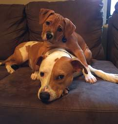 dog rescue new jersey