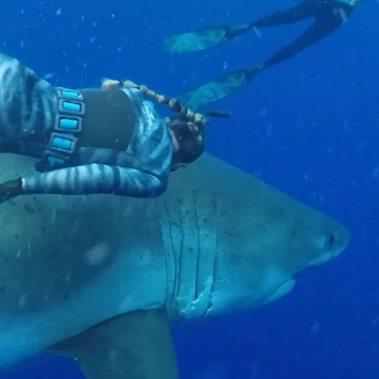 Deep Blue Great White Shark Spotted Again off Coast of Hawaii - NowThis