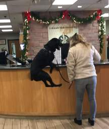 Endo the jumping dog at the vet